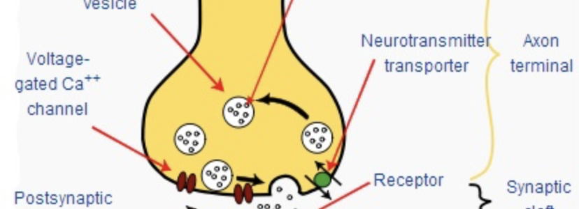Synapses and Ganglia